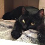 Опыт переезда. Часть 2: Как перевезти кошку